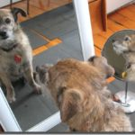 The Dog in the Mirror