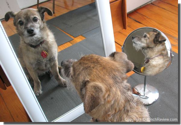 dog looking in the mirror
