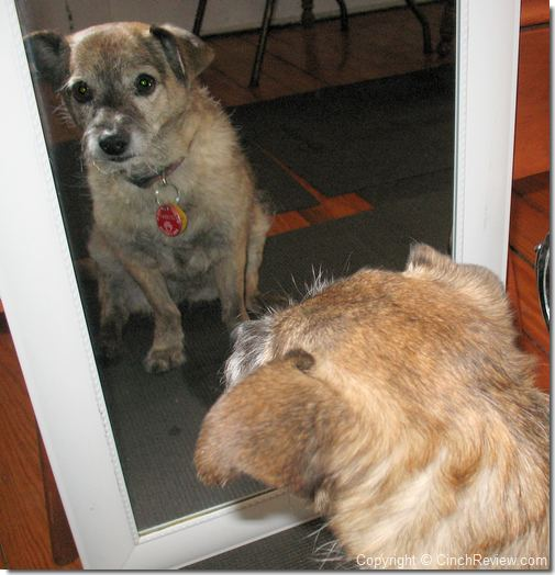 dog looking in a mirror